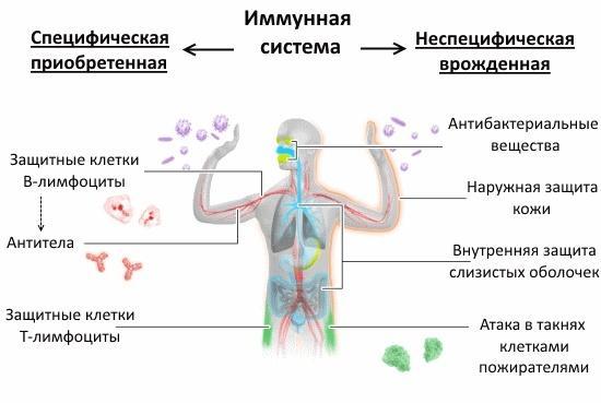 Как укрепить иммунитет ребенку - неспецифическая защита организма