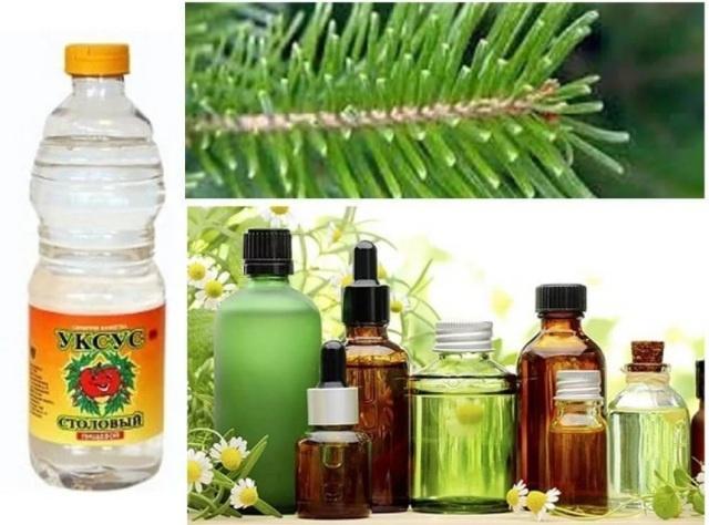 Эфирные масла и уксус отпугивают насекомых