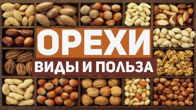 Орехи: виды и польза
