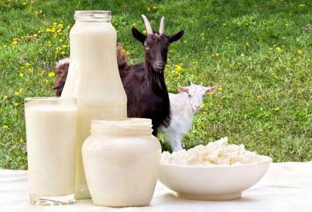 как снизить жирность козьего молока