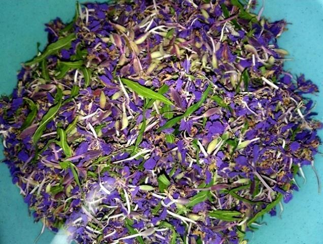 Высушенные цветы иван-чая синего оттенка