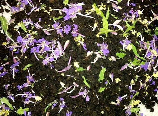 Заварка иван-чая с цветами (добавлены цветы таволги)