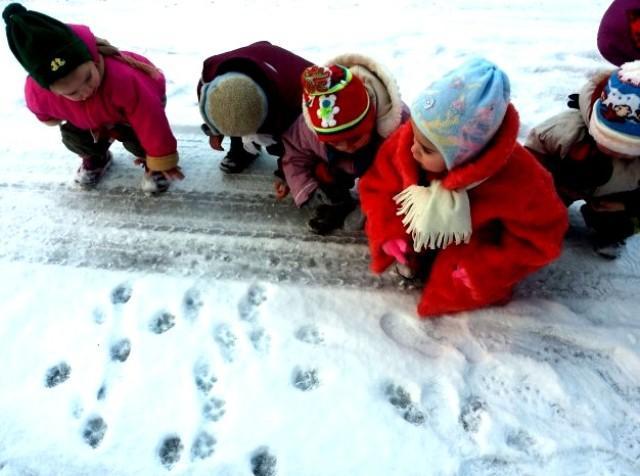 Чьи следы на снегу