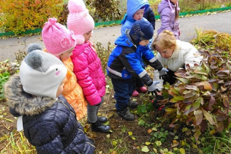 Проведение прогулок с детьми дошкольного возраста наблюдение за природой