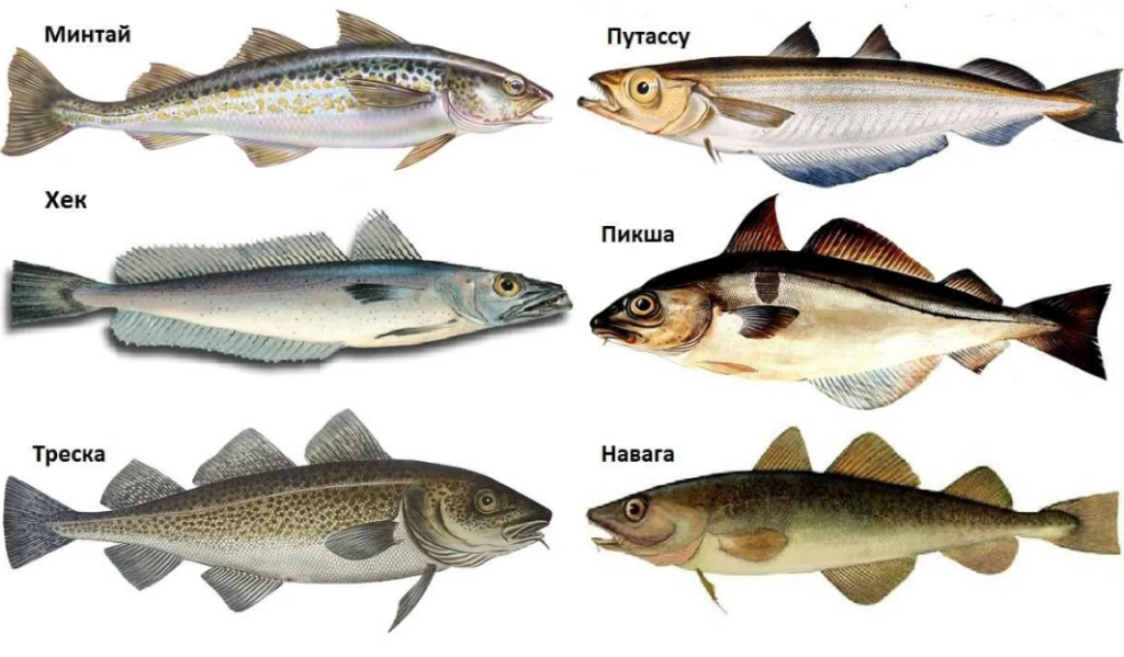 Какая рыба полезнее для детей