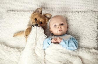 Животное и ребенок дома